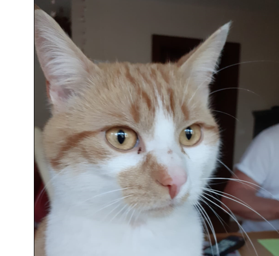Katze, Vomp(05/20)