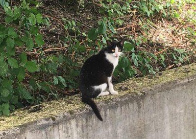 Katze, Vomp(05/12)