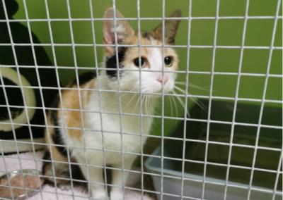 Katze, Zirl(05/20)