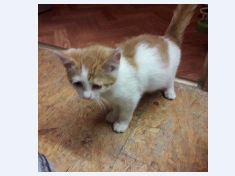 Katze, Angath(06/20)