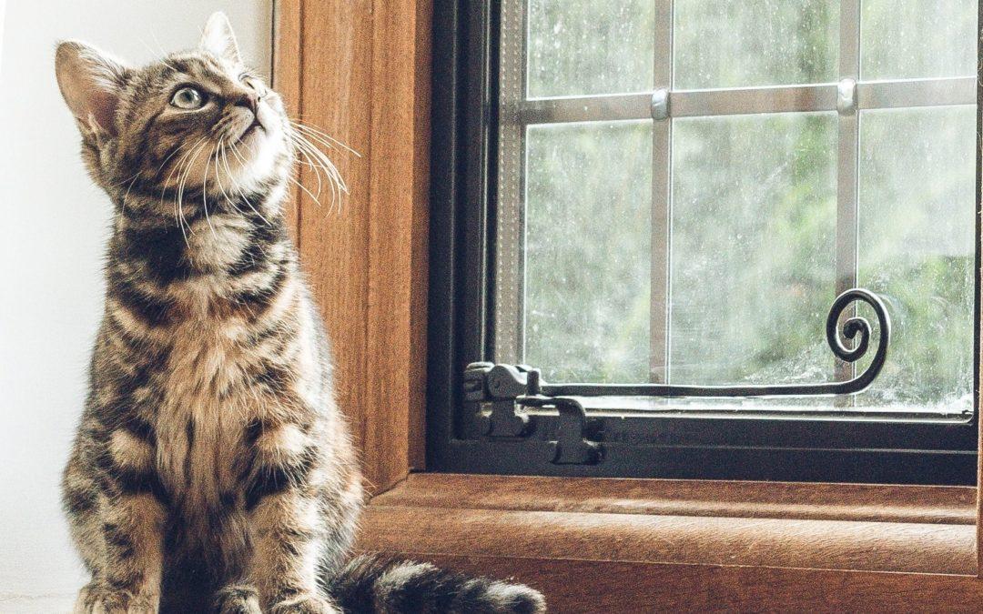 Kippfenster – Wenn Katzen in der Klemme stecken…