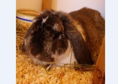 Kaninchen, Mils(06/20)