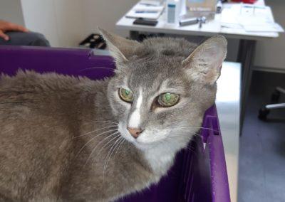 Katze, Telfs(06/20)