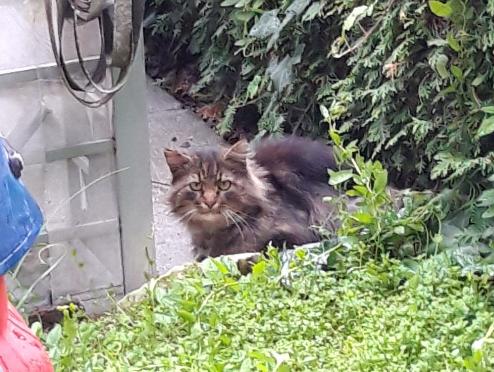 Katze, Hall(06/20)