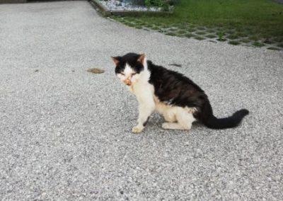 Katze, Wörgl(06/20)