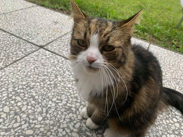 Katze, Innsbruck(07/20)