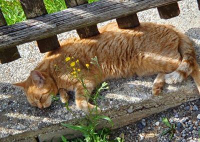 Katze, Kirchbichl (7/20)