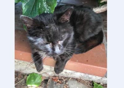 Katze, Mils(07/20)
