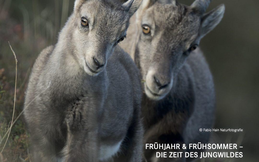 Tierschutzkurier Ausgabe 3/20 ist online