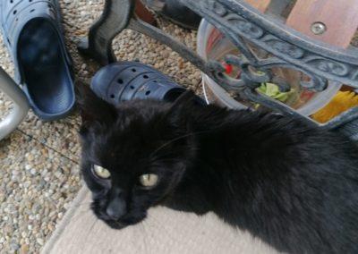 Katze, Wörgl (7/20)