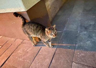 Katze, Brixlegg (8/20)