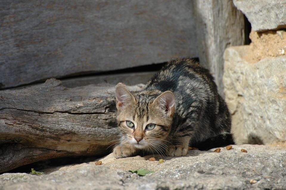 Halbwüchsige scheue Katzen suchen dringend einen Platz