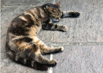 Katze, Westendorf(08/20)