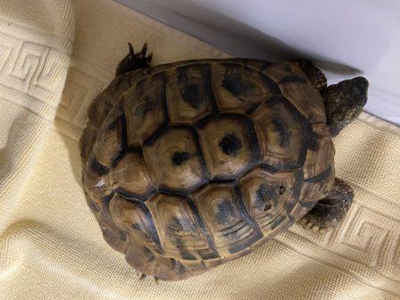 Schildkröte, Kufstein (7/20)