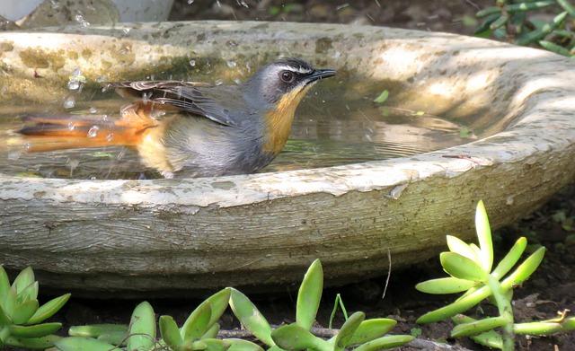 Wieder ein Hitzetag: Vögel und Insekten Wasserstellen anbieten!