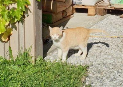 Katze, Aldrans(09/20)