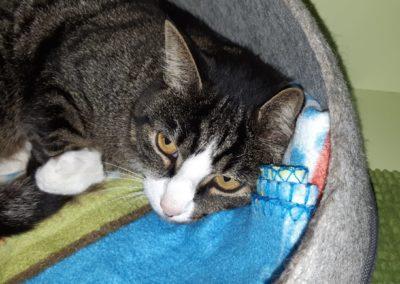 Katze, Hall(09/20)