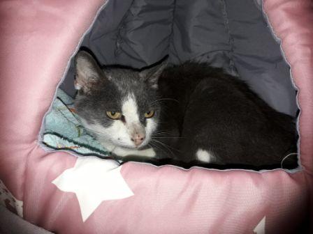 Katze, Hopfgarten (9/20)