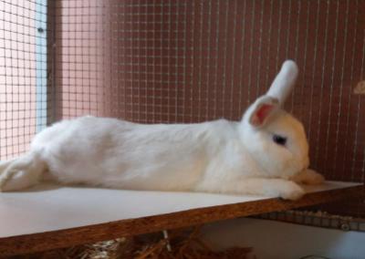 Kaninchen, Zirl(09/20)