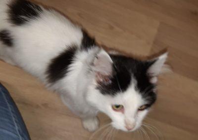 Katze, Hall( 09/20)