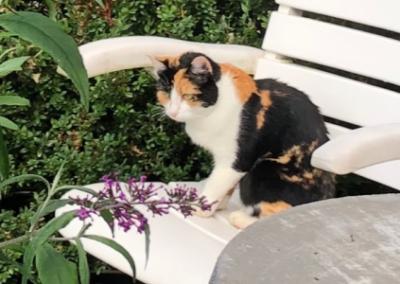 Katze, Rum(09/20)