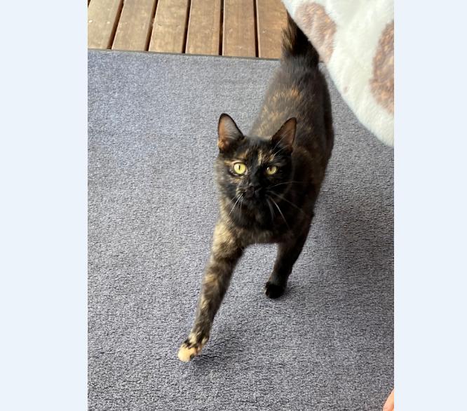 Katze, Ampass(09/20)