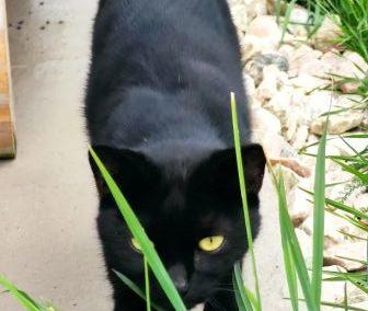 Katze, Schwoich (8/20)