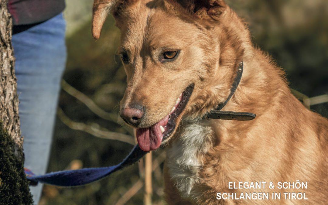 Tierschutzkurier Ausgabe 4/20 ist online