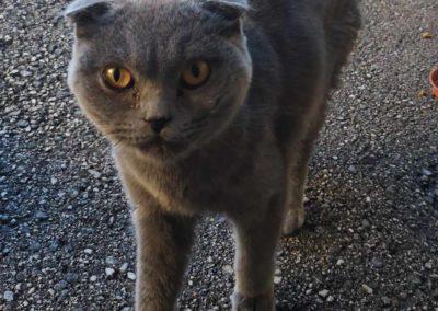 Katze, Vomperberg(09/20)