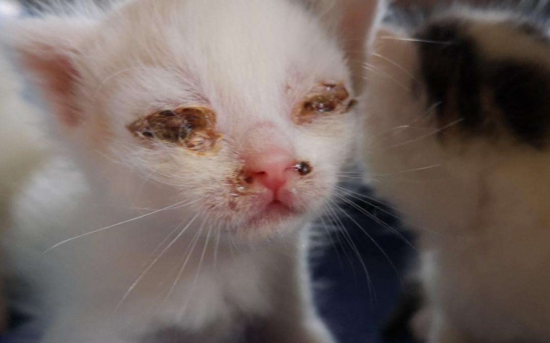 Welttierschutztag: Katzenleid durch ignoriertes Kastrationsgesetz