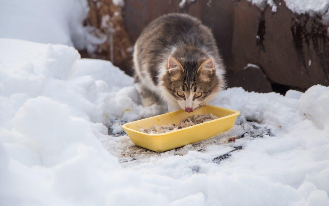 Es werden dringend Futterspenden für Streunerkatzen benötigt