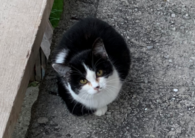 Katze, Ramsau(10/20)