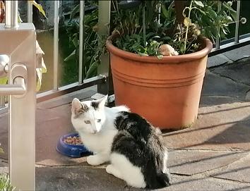Katze, Langkampfen (10/20)