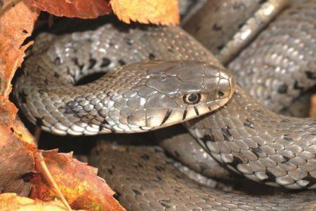 Elegant & schön: Schlangen in Tirol