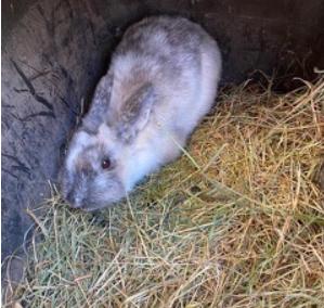 Kaninchen, Scheffau (10/20)