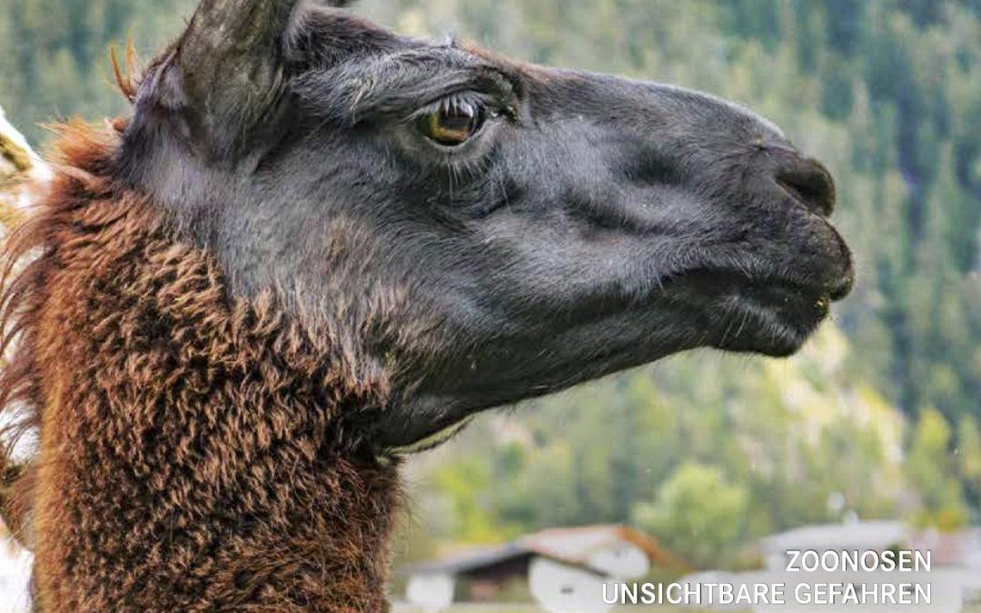 Der Tierschutzkurier Ausgabe 5/20 ist online