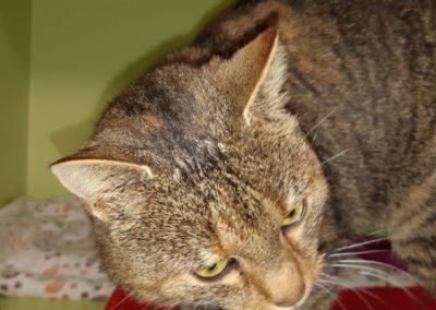 Katze, Aldrans(11/20)