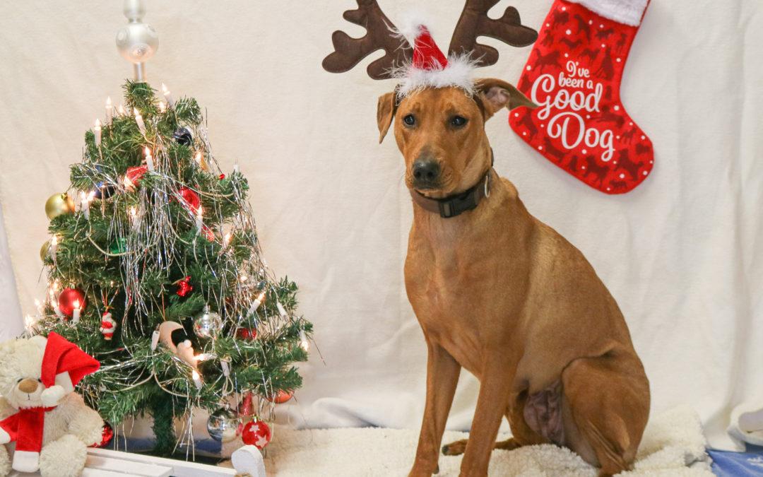 Wir wünschen uns was: Weihnachts-Wunschzettel unserer Tierheimtiere