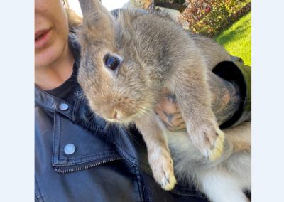 Kaninchen, Völs(11/20)