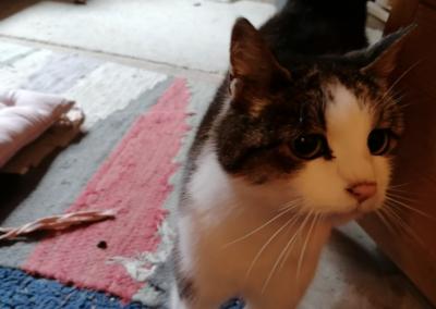 Katze, Scheffau(11/20)