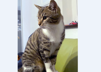 Katze, Götzens(11/20)