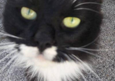 Katze, Wörgl (11/20)
