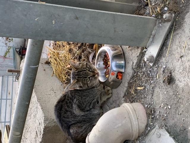 Katze, Weerberg(11/20)