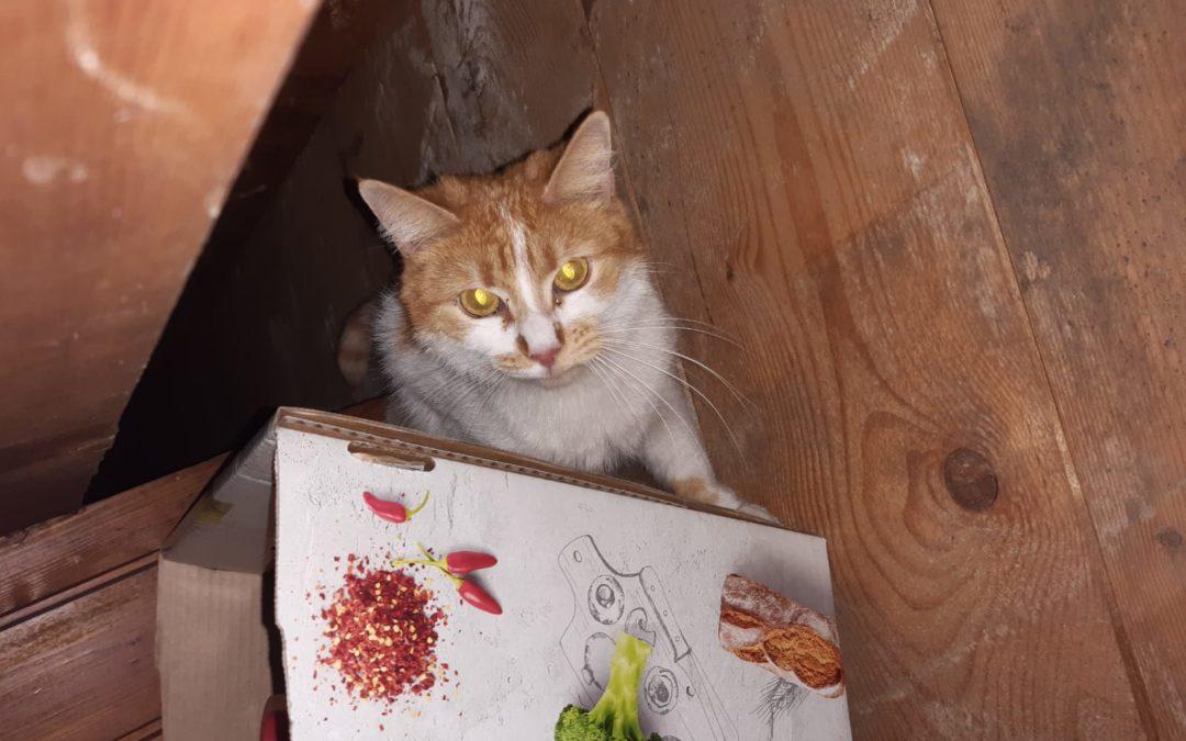 Katze, Kramsach (12/20)