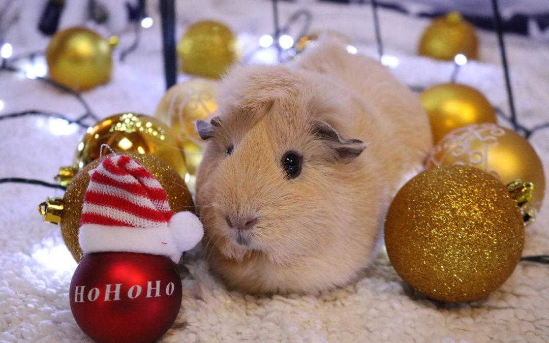 Alle Jahre wieder: Trotz Informationskampagnen reißt die Nachfrage nach Tieren als Weihnachtsgeschenk nicht ab