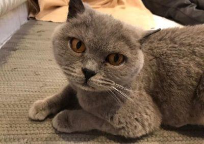 Katze, Flirsch(01/21)