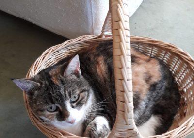 Katze, Ehenbichl(01/20)