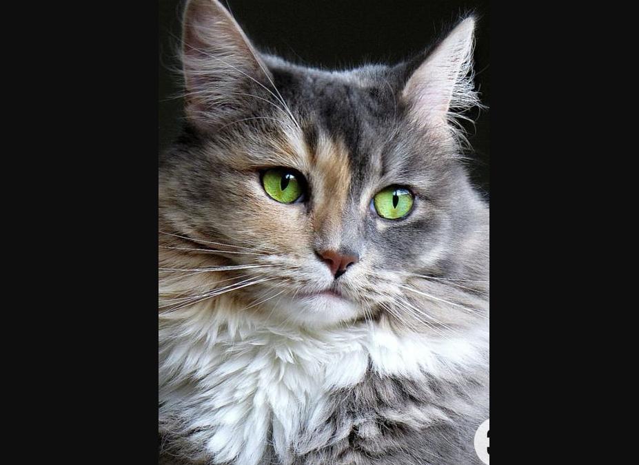 Katze, Fügen(02/21)
