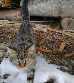 Katze, Going (3/21)