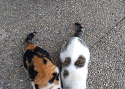 3 Katzen, Going (3/21)